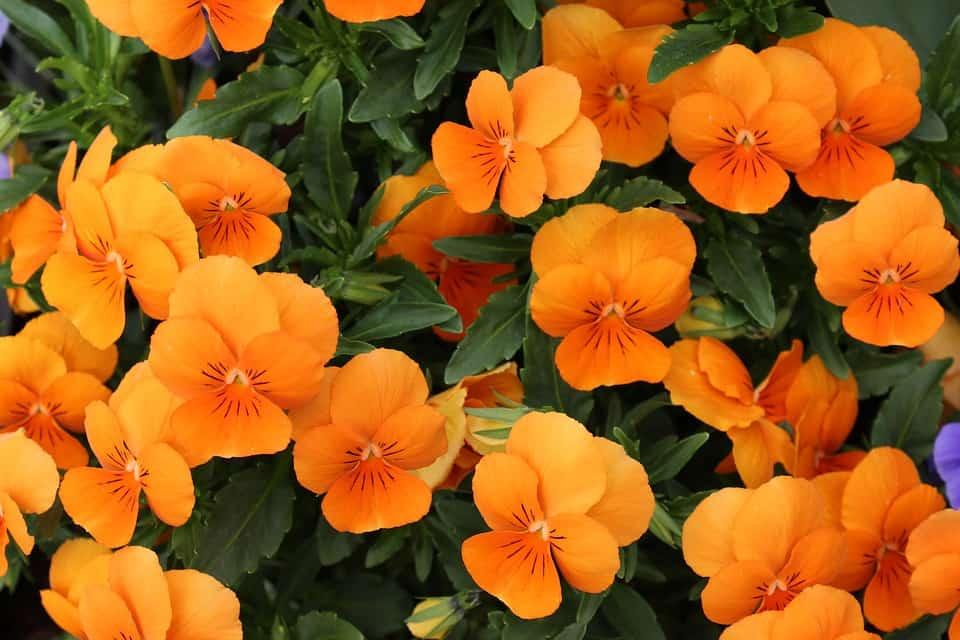plant-profile-nasturtium-guide-1-the-big-spreaders