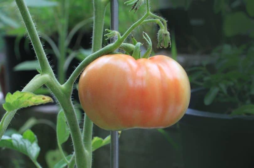 potential-garden-hazards-for-dogs-1-plants