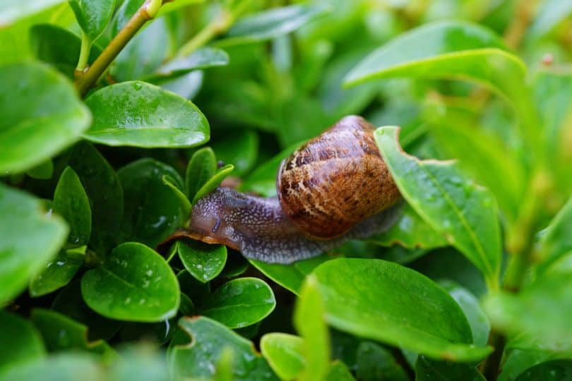 potential-garden-hazards-for-dogs-3-slugs-and-snails