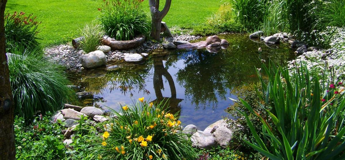potential-garden-hazards-for-dogs-5-ponds