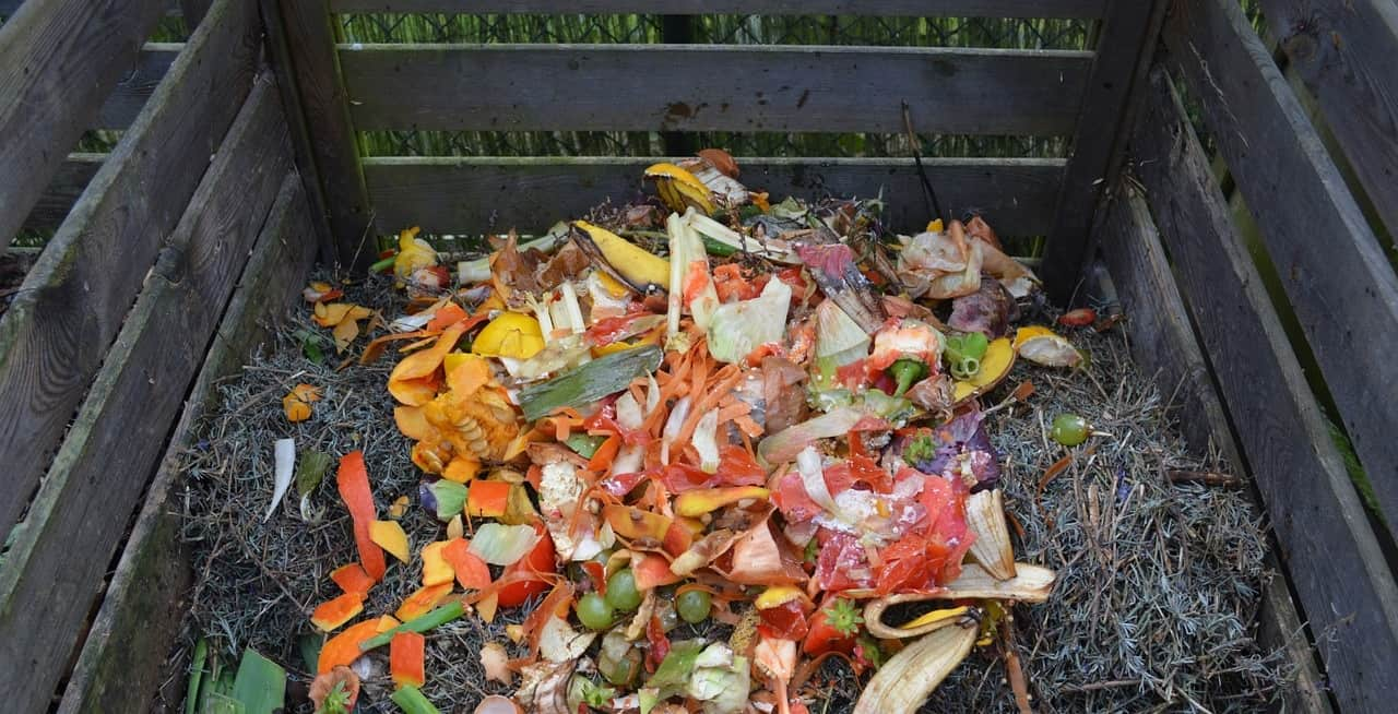 potential-garden-hazards-for-dogs-7-compost