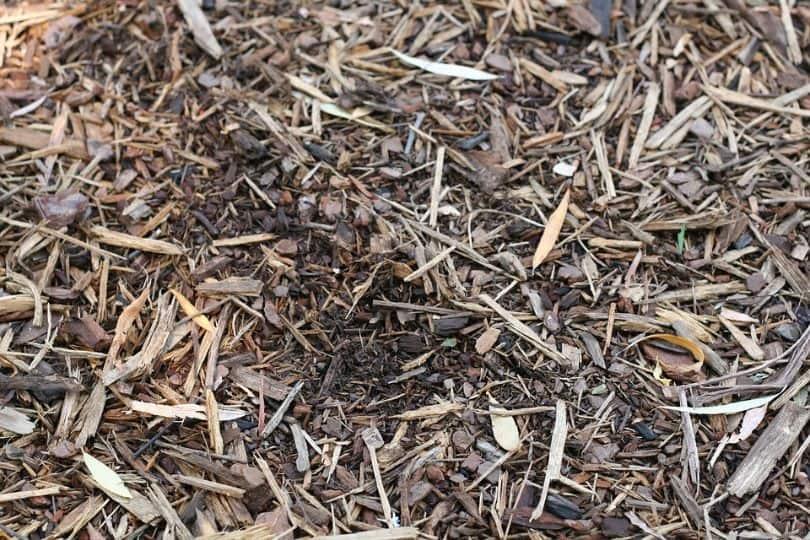 potential-garden-hazards-for-dogs-8-cocoa-mulch