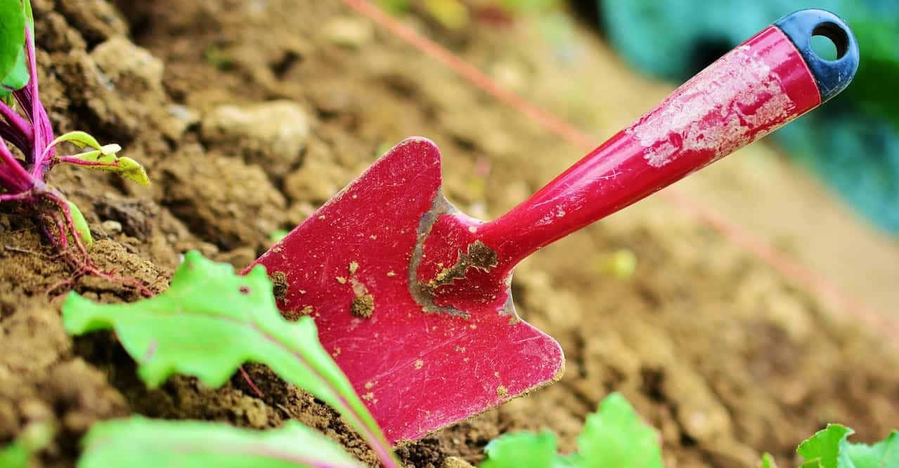 prepare-your-garden-for-a-heatwave-1-look-after-your-soil