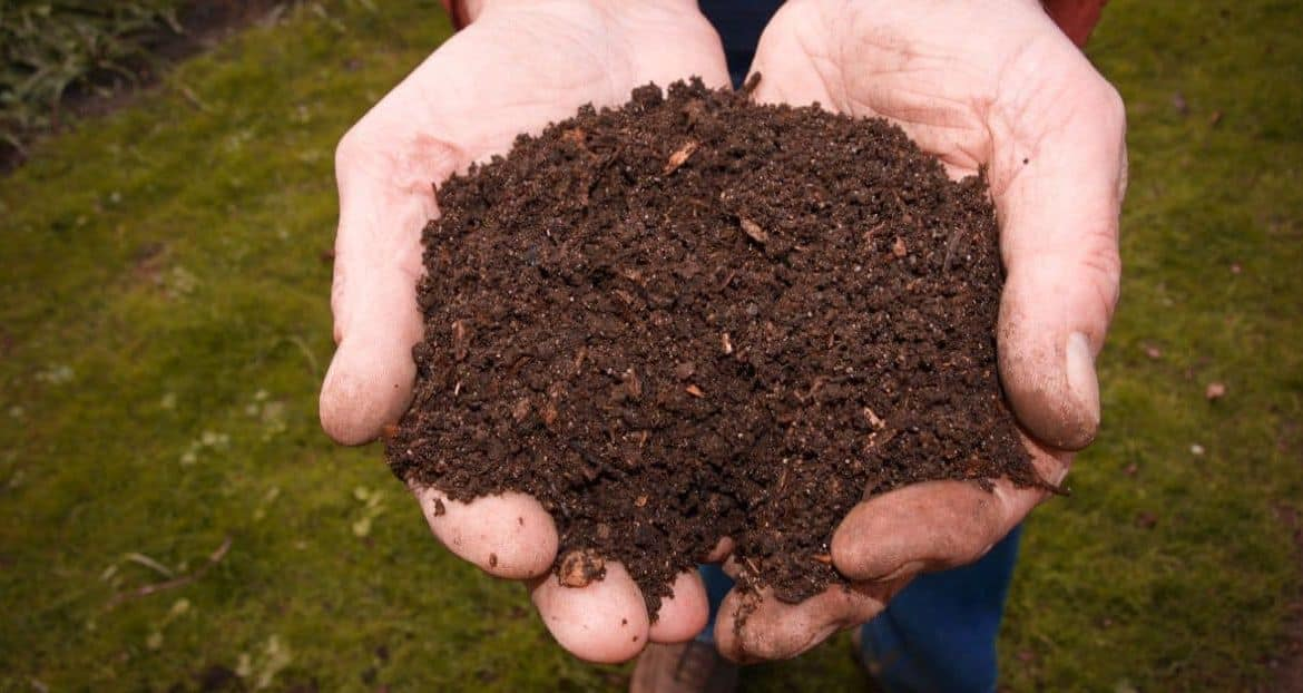 Composting DOs and DON'Ts: Making the Perfect Organic Pile
