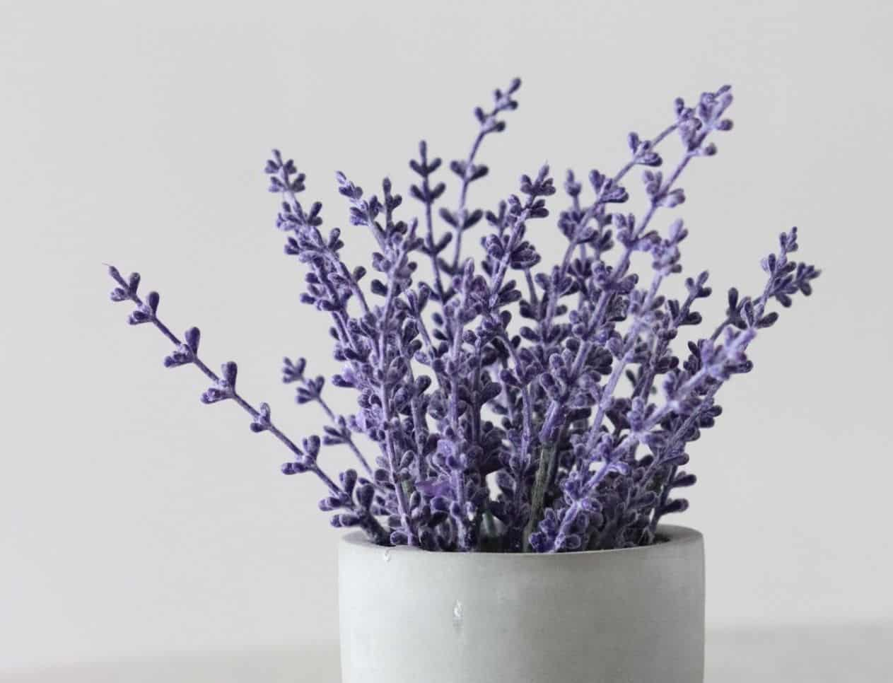 scented-houseplants-air-freshener-1-lavender
