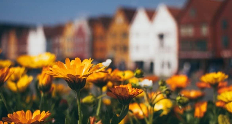 Seven Flowers for an Autumn Garden