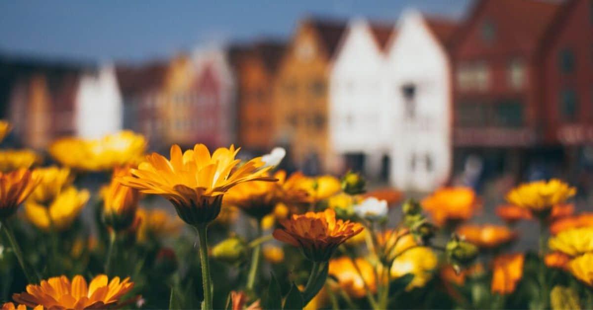 seven-autumn-flowers