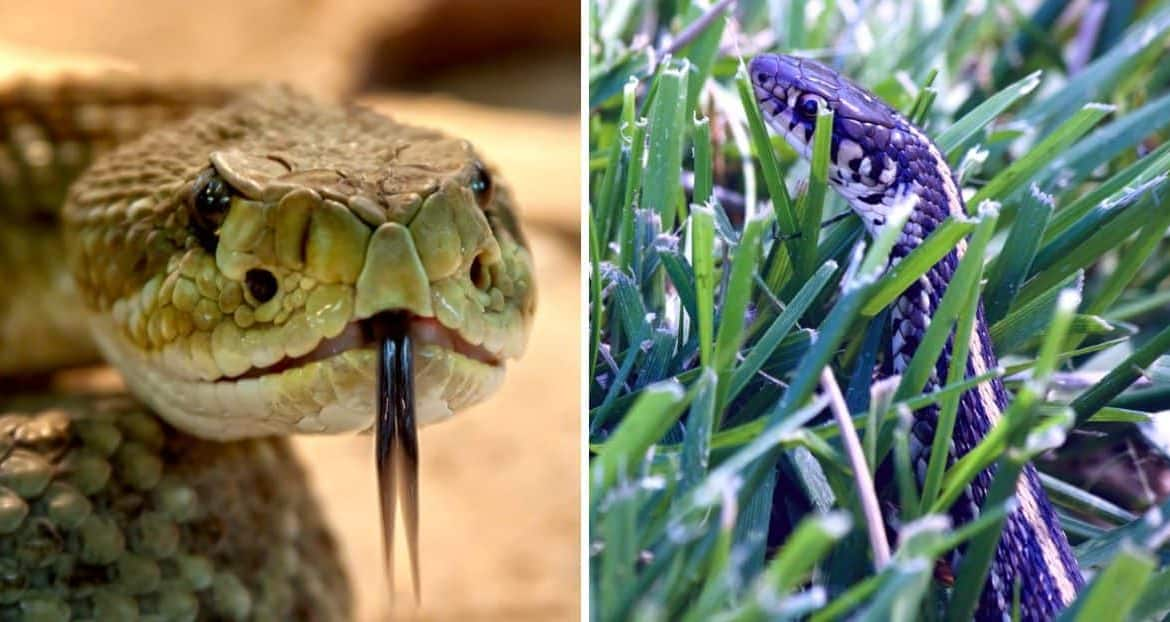 Find Out the Snakes and Lizards That Could Be Hiding in Your Garden