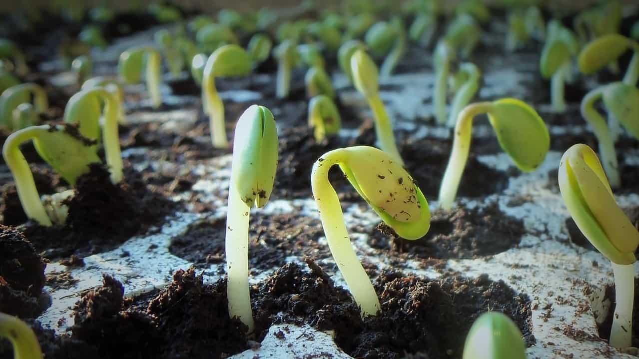 spring-garden-timetable-preparation-3-plant seeds