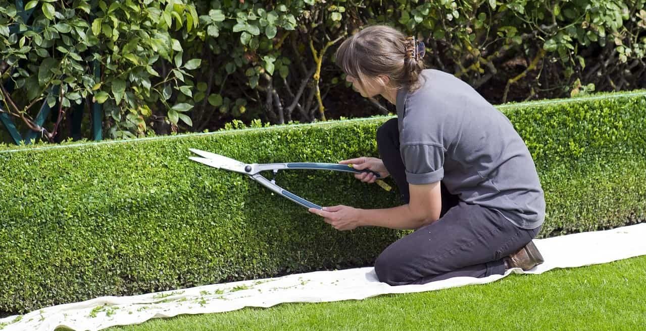 spring-garden-timetable-preparation-7-cutting-hedges