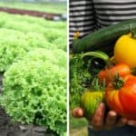 Eight Reasons Why You Should Start A Vegetable Patch In Your Garden