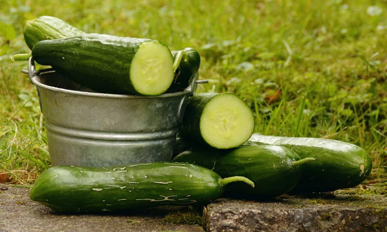 start-garden-vegetable-patch-3-environment-friendly