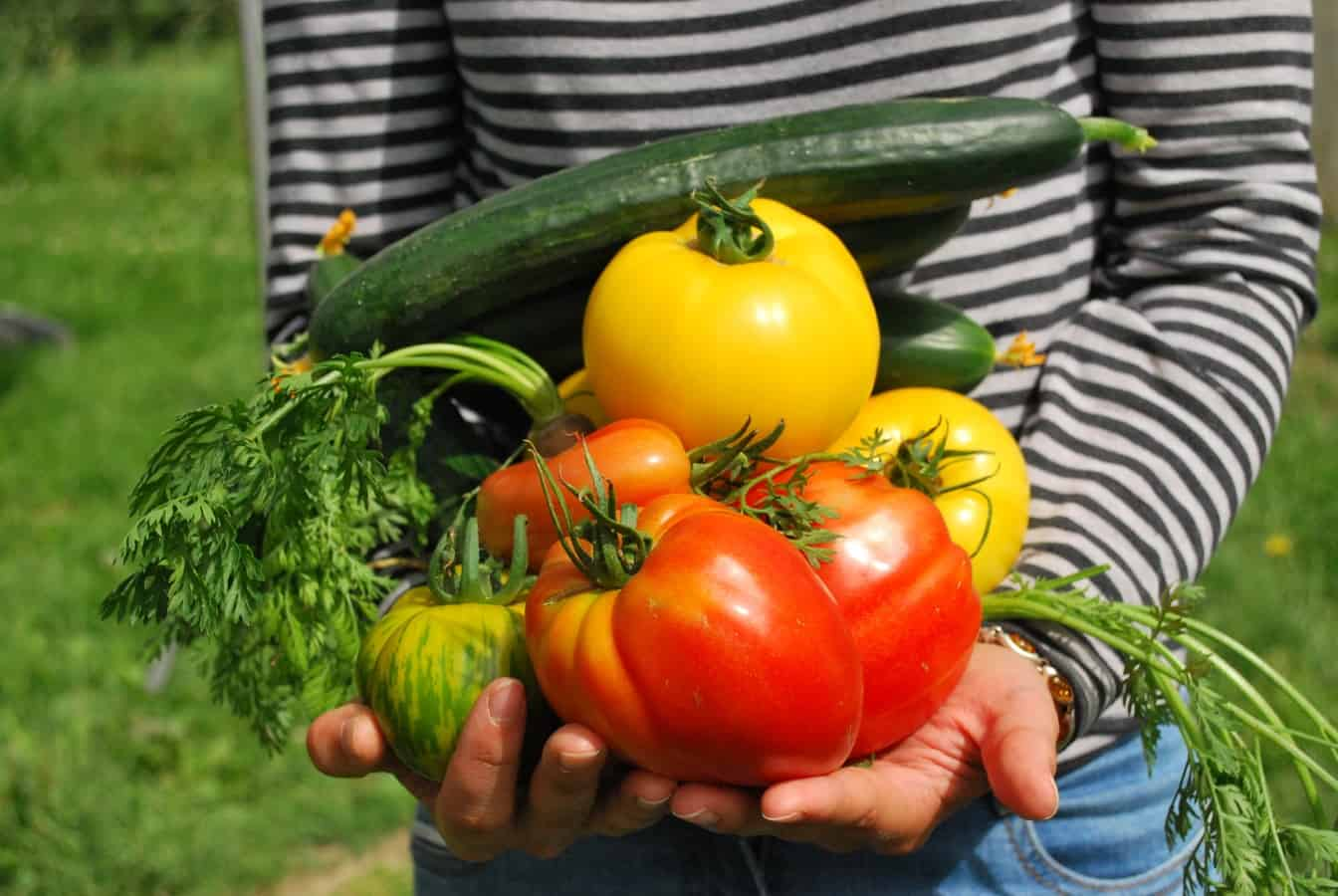 start-garden-vegetable-patch-6-chemical-free-ingredients