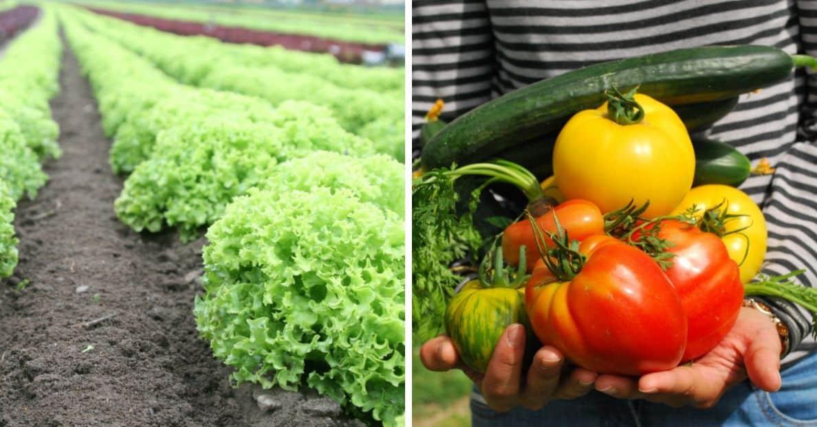 start-garden-vegetable-patch