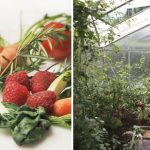 Vegetable Garden: Here's How to Start a Vegetable Garden from Scratch