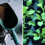 Seed Starter FAQ – Everything You Need to Know About Seed Starters