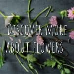 How To Discover More About Flowers