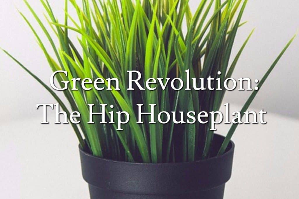 Green Revolution: The Hip Houseplant