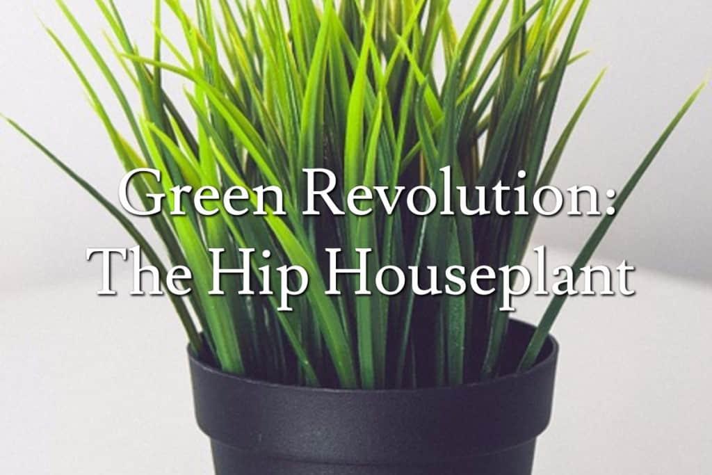 Green Revolution: The Hip Houseplant