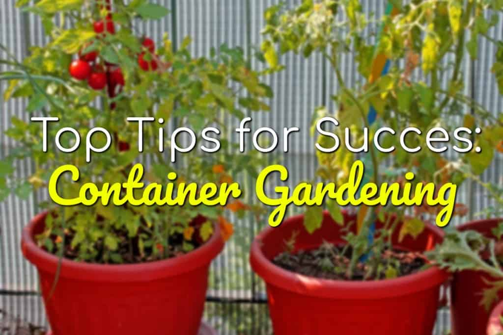 Container Gardening: Top Tips For Success
