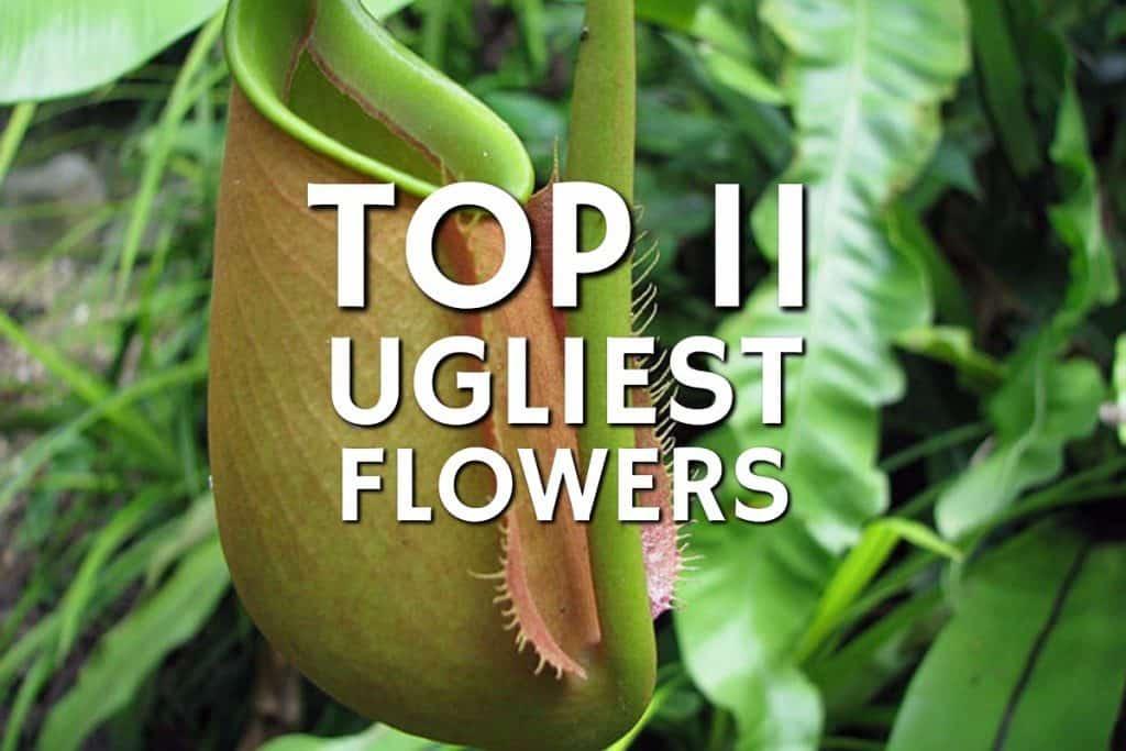 Top 11 Ugliest Flowers