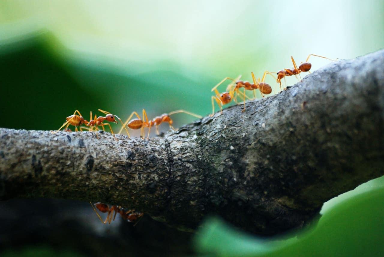 summer-garden-problems-2-ants