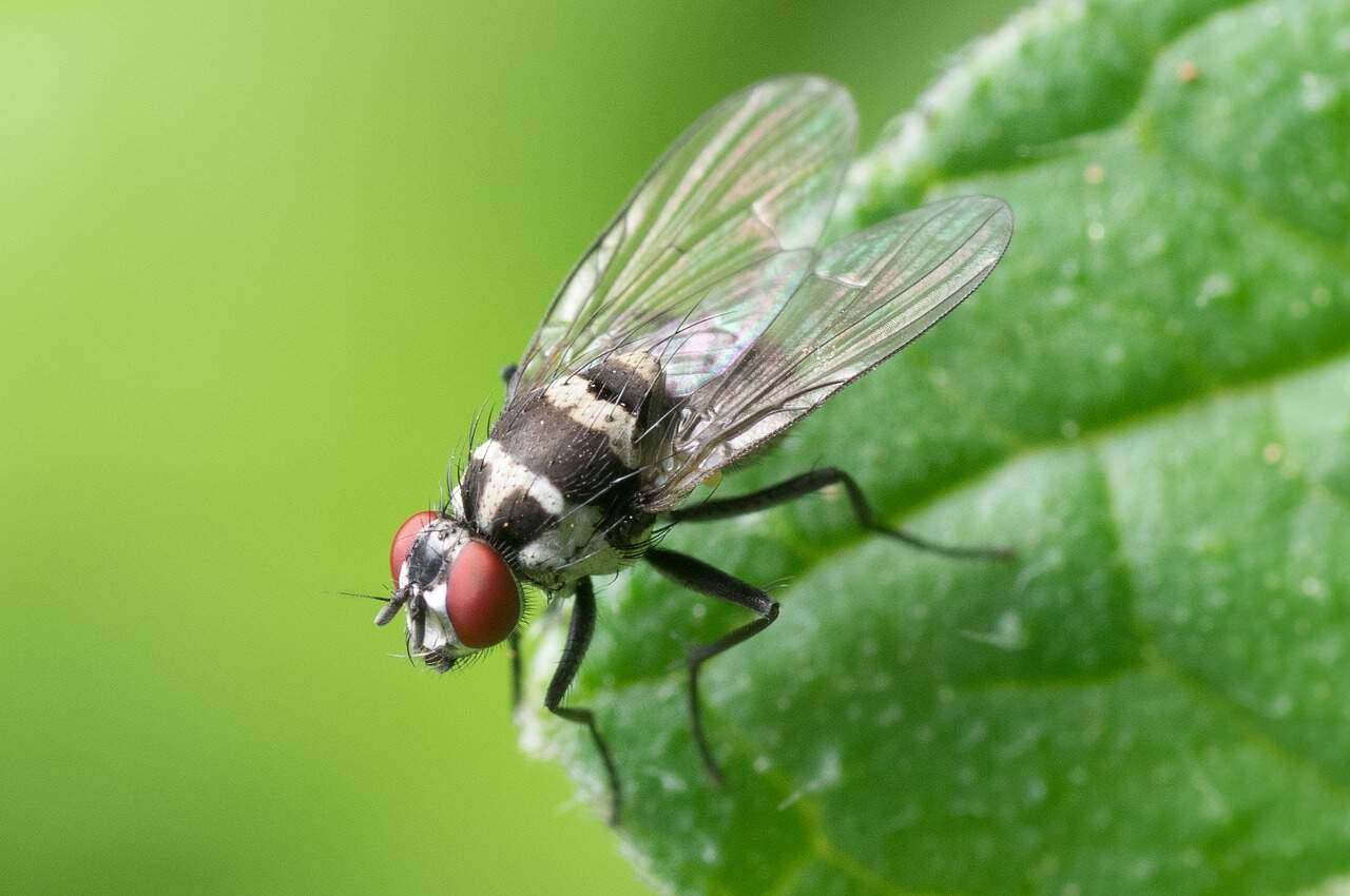 summer-garden-problems-4-flies