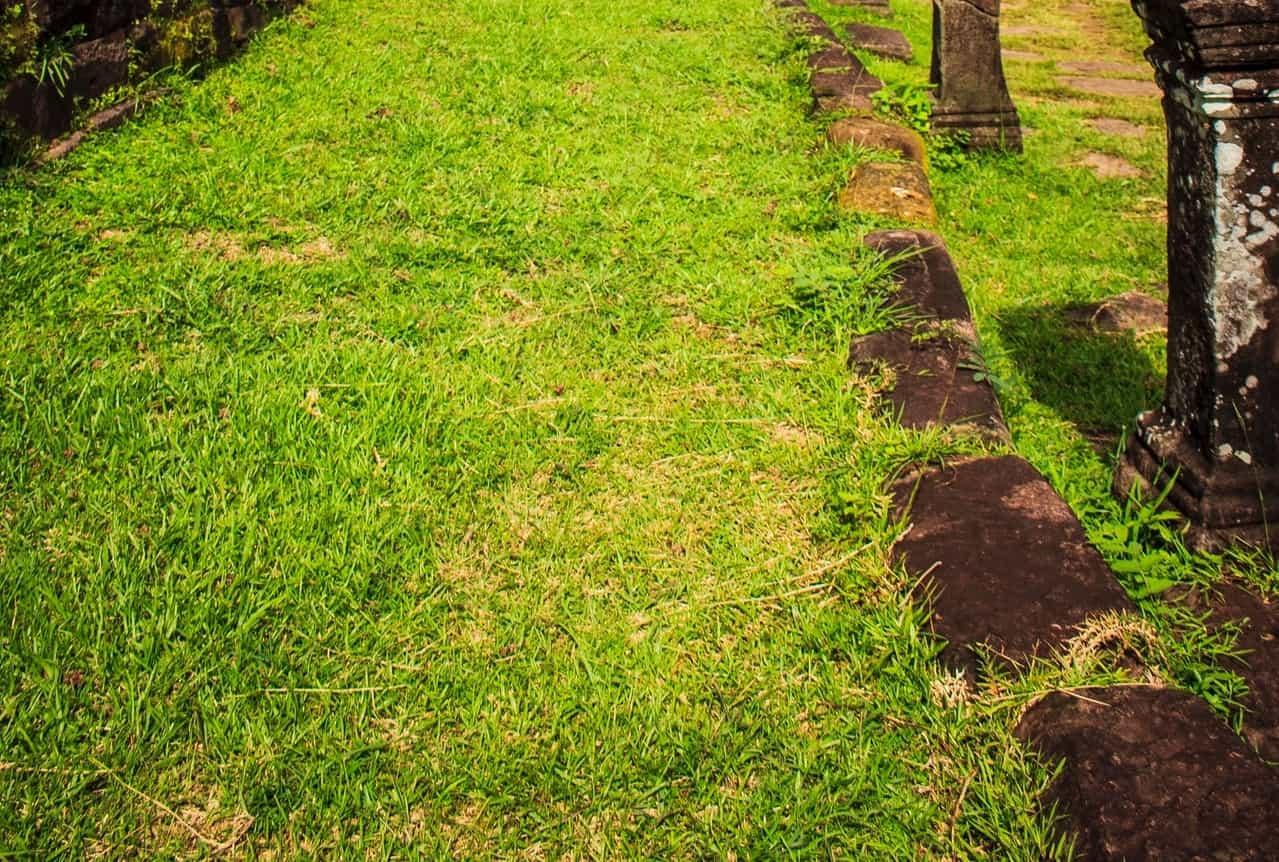 summer-garden-problems-5-dry-grass