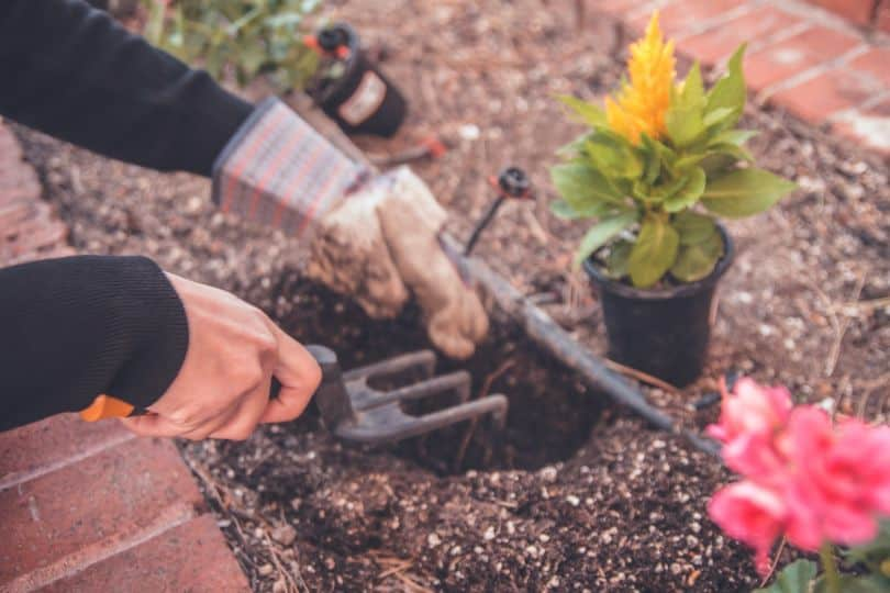 sustainable-garden-this-summer-1-sustainable-garden-lifestyle