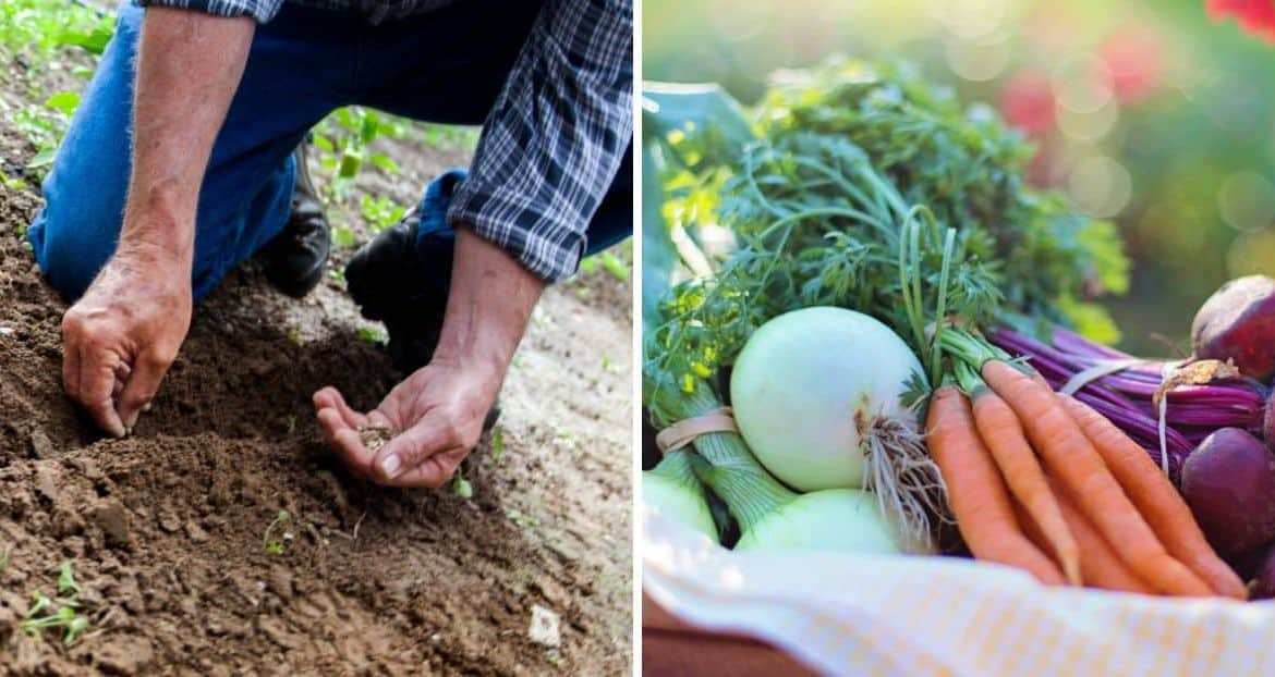 5 Ways You Can Start A Sustainable Garden This Summer