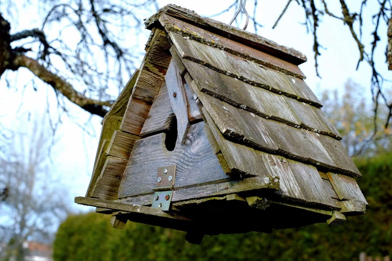 things-do-with-dad-garden-4-build-a-bird-house