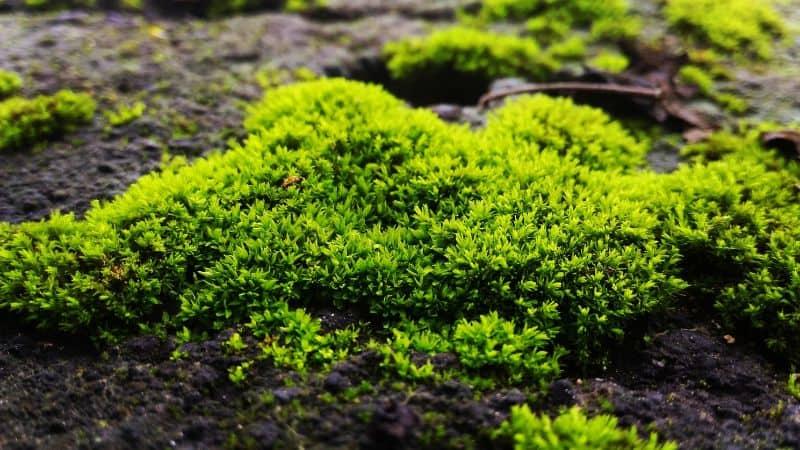 timeless-gardening-tips-1-moss