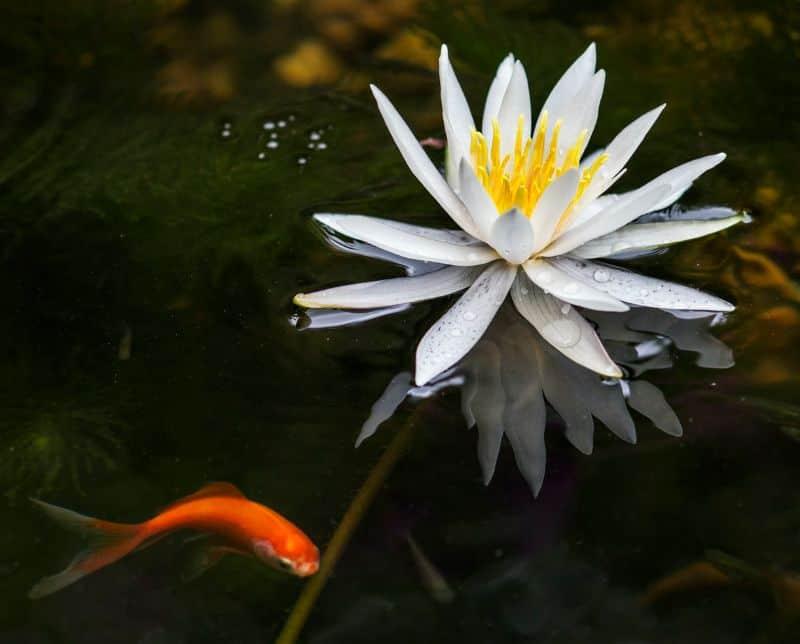 tips-garden-diy-pond-1-decide-the-depth