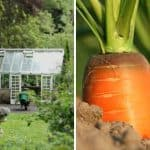 5 Clever Tips on How to Start a Garden: A Beginner's Guide