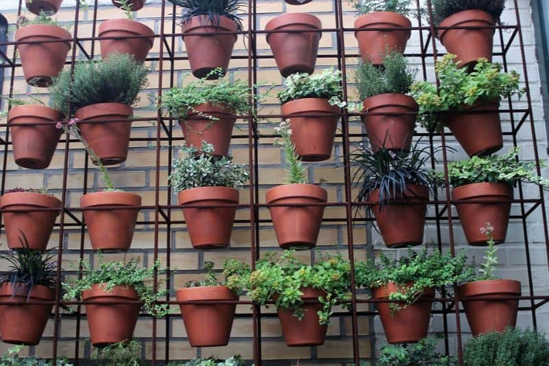 tips-to-city-gardening-4-plant-upwards