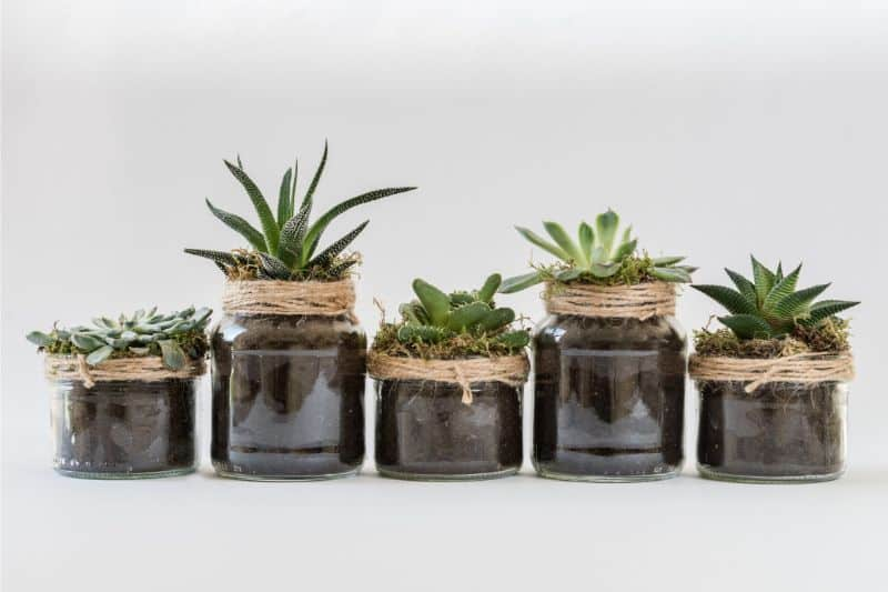 tips-to-city-gardening-4-small-succulents