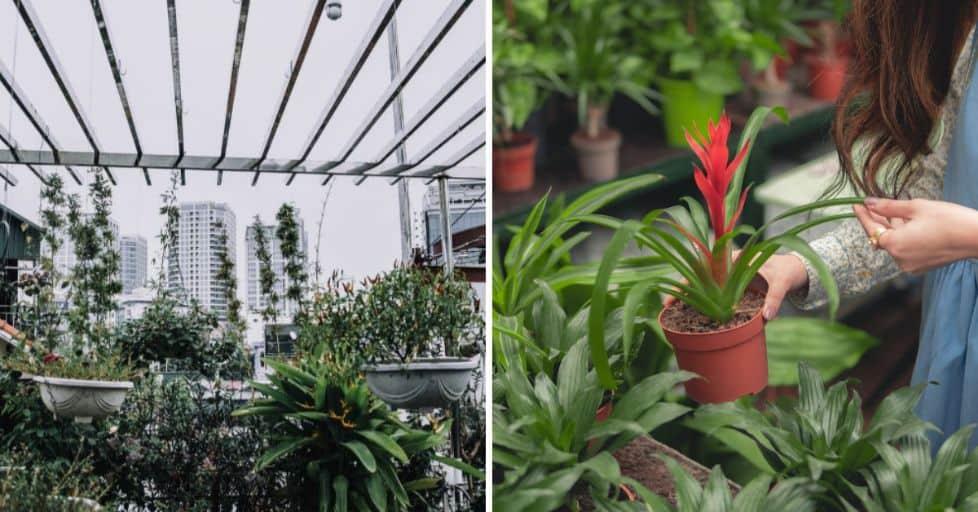 7 Top Tips for City Gardening – Space-Saving Urban Gardening Hacks