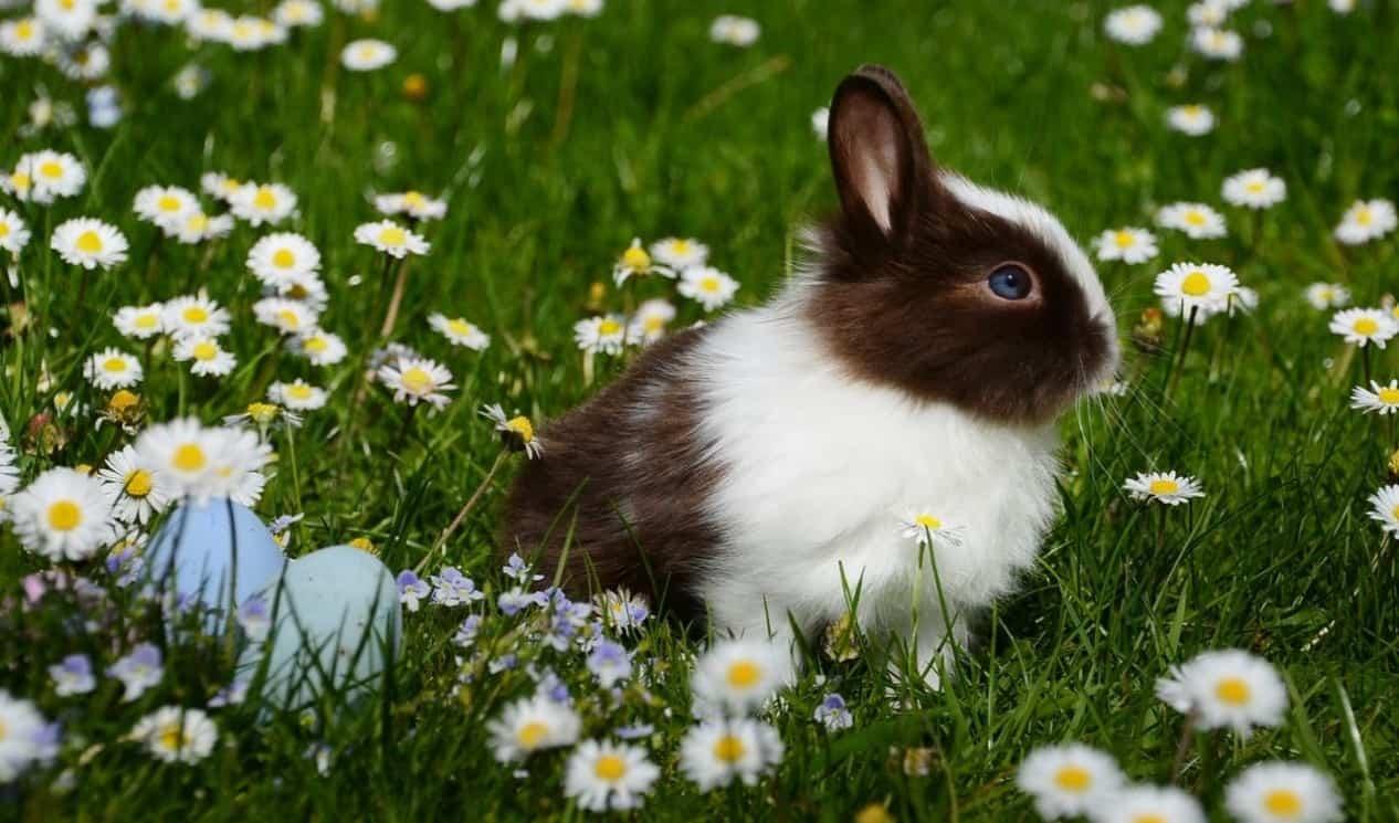 top-garden-pets-brits-1-rabbits