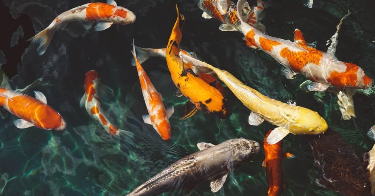 top-garden-pets-brits-3-fish