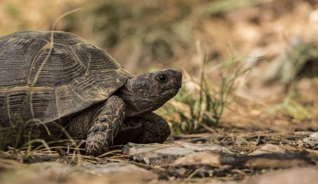 top-garden-pets-brits-5-tortoise