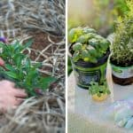 7 Smart Ways on How to Transform Your Garden on a Budget