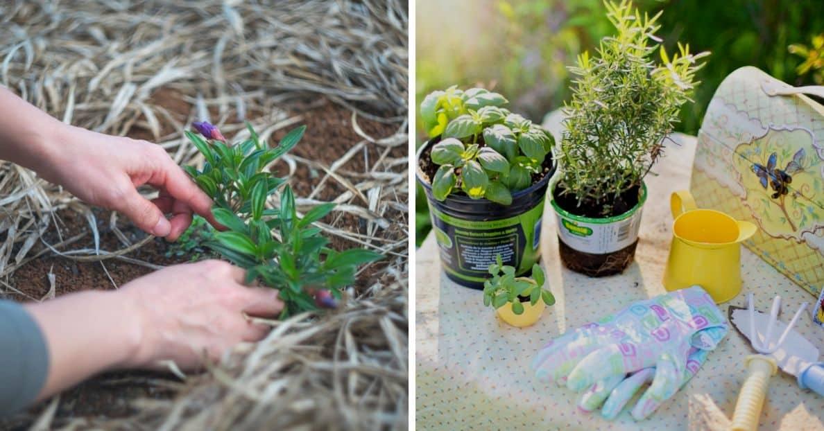 transform-garden-on-a-budget