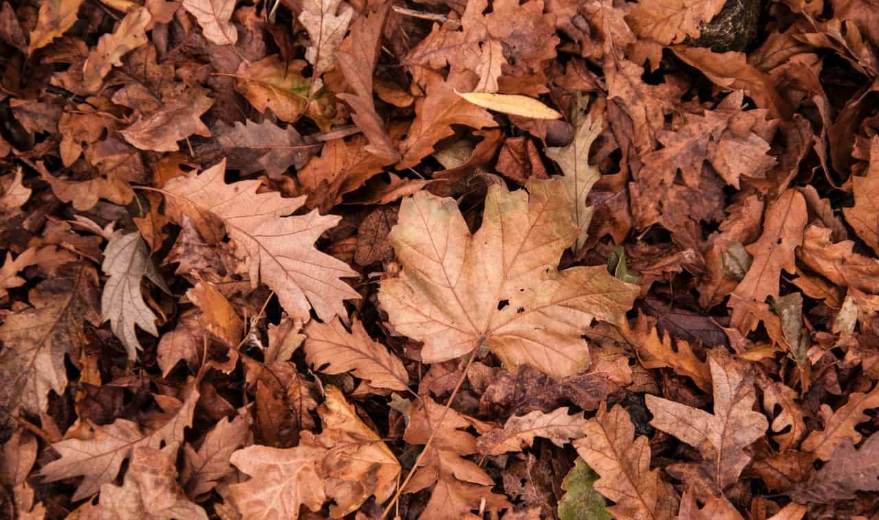 useful-gardening-tips-5-compost-from-the-leaves