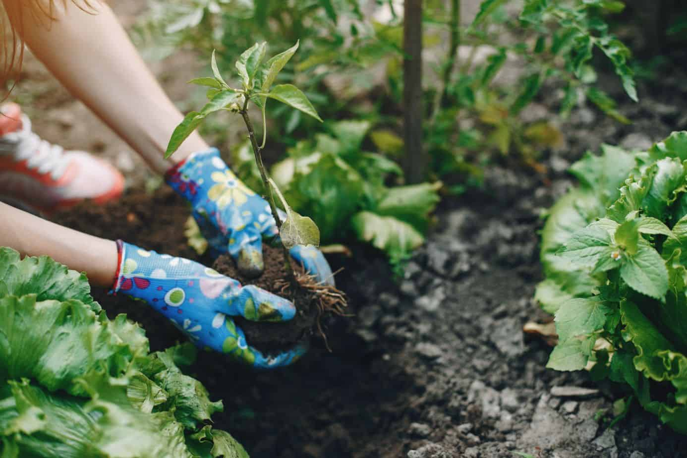 vegetable-gardening-tips-6-decide-on-the-best-plot-size