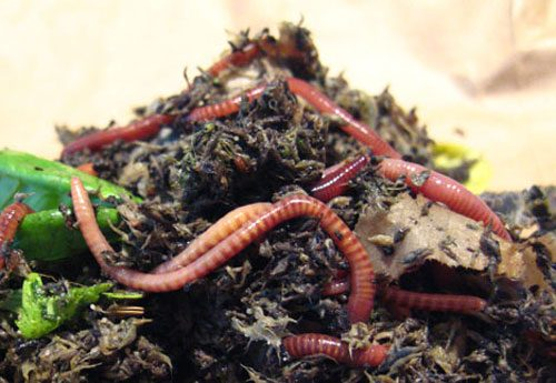 A Guide to Vermicomposting