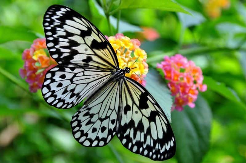 ways-to-create-a-sustainable-garden-2-wildlife-gardens-pixabay