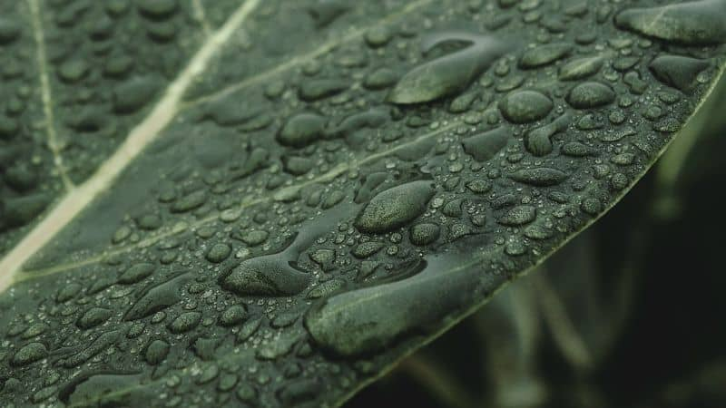 ways-to-create-a-sustainable-garden-4-collect-rain-water-pixabay