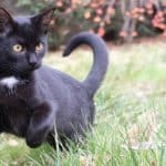 9 Ways to Keep the Cats off the Garden
