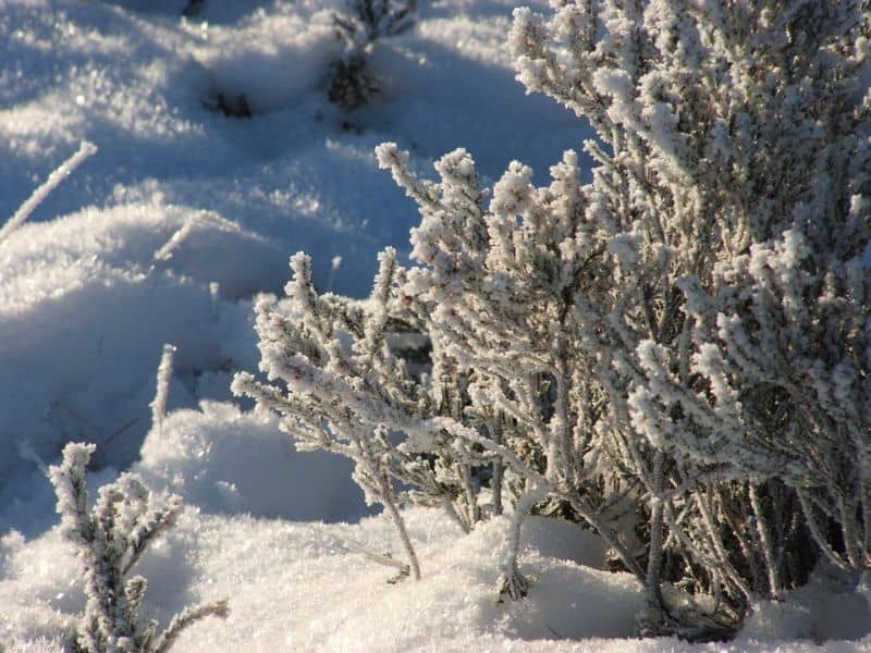 ways-to-protect-your-garden-against-snow-and-ice-damage-1-shaking-off-snow
