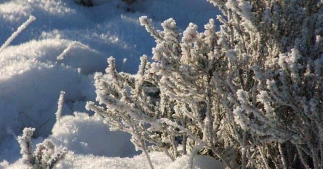 10 Effective Ways to Protect Your Garden Against Snow and Ice Damage